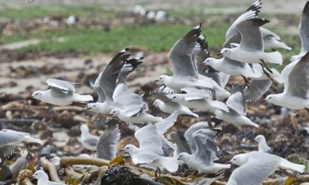 Bird Deterrents – Different Methods For Bird Control